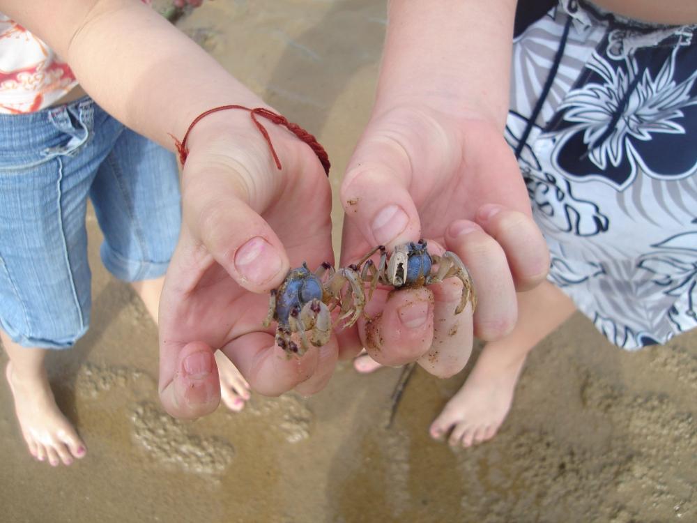 Australian Crusteaceans