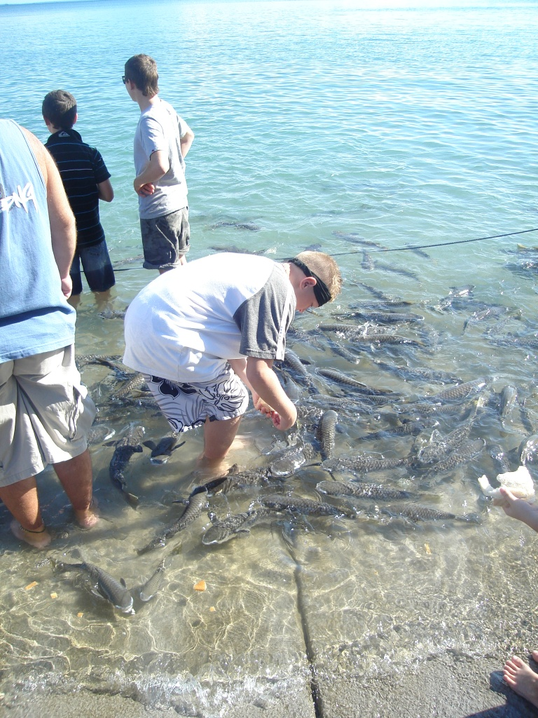 Dr's Gully Fish feeding