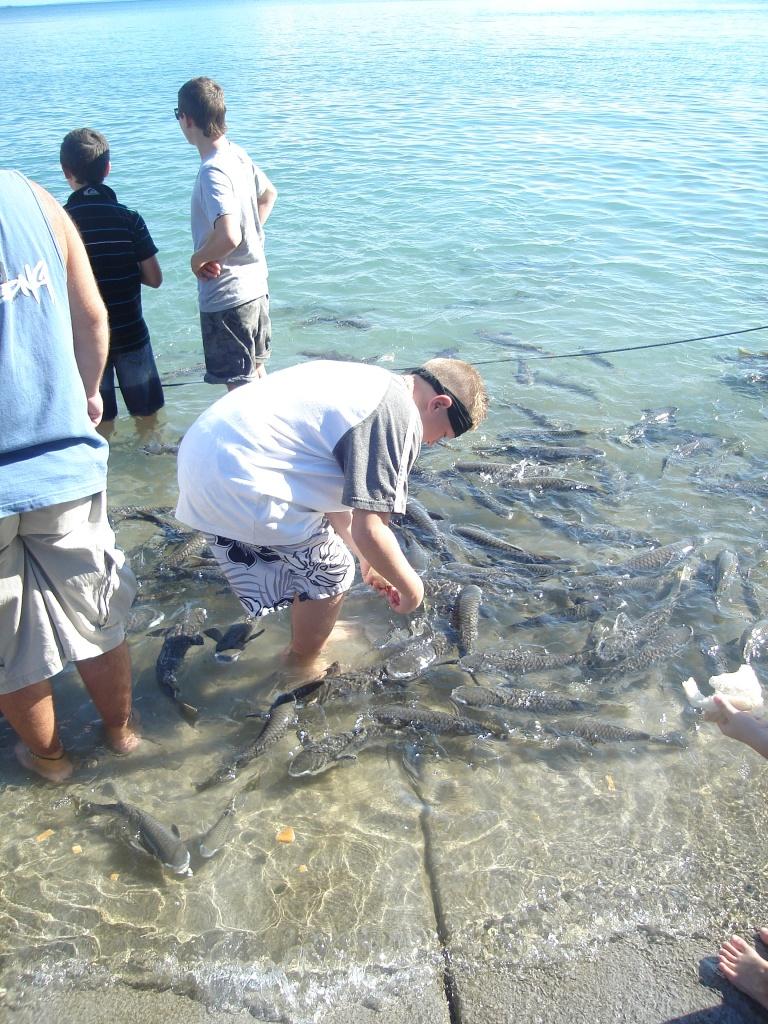 Dr's Gully Fish feeding