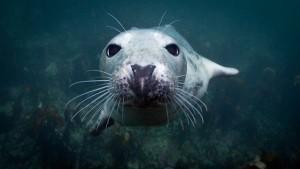 UK Diving