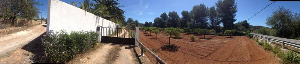 Orange groves of Ibiza