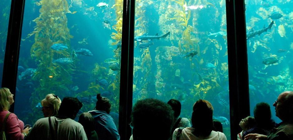 Aquariums of USA